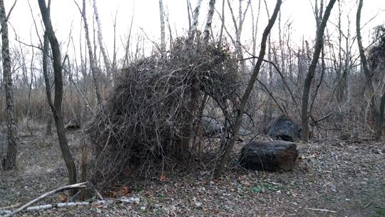 A photograph from Amico Island by Laura Chenault showing a nest like structure of fallen tree branches surrounded by bare trees.