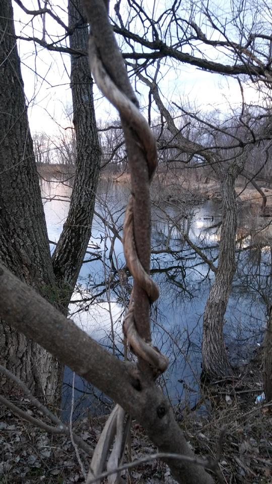 A photograph of Amico Island photo by Laura Chenault of bare trees reflected in water.