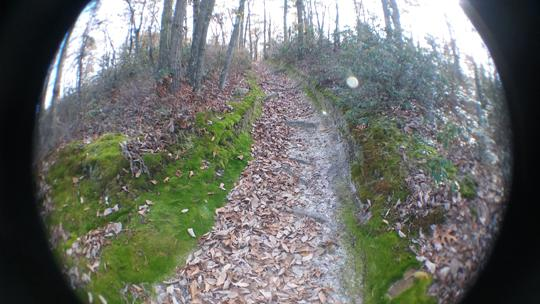 A fisheye photo of a trail at Black Run Preserve in Evesham Township, New Jersey. Photo by Laura Chenault.