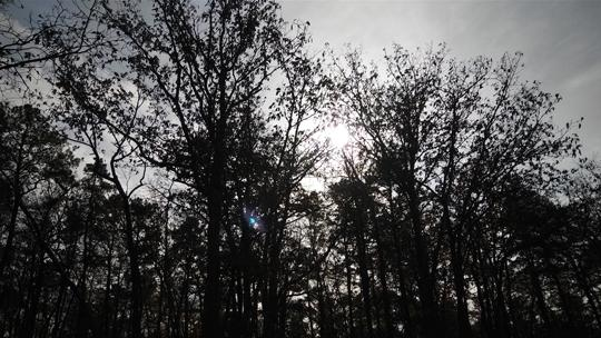A photo of a tree silhouetted by the sun at Black Run Preserve in Evesham Township, New Jersey. Photo by Laura Chenault.