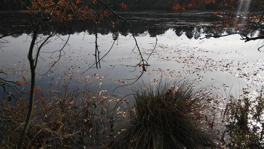 A photo of a trees refelcted in the water at Black Run Preserve in Evesham Township, New Jersey. Photo by Laura Chenault.