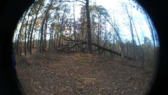 A fisheye photo of trees at Black Run Preserve in Evesham Township, New Jersey. Photo by Laura Chenault.