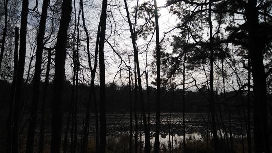A photo of trees at Black Run Preserve in Evesham Township, New Jersey. Photo by Laura Chenault.