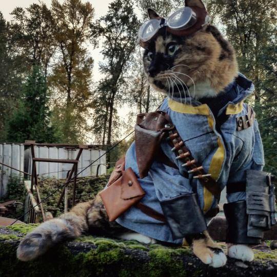 Fallout Cat - Photo of a cat dressed up like a Fallout hero