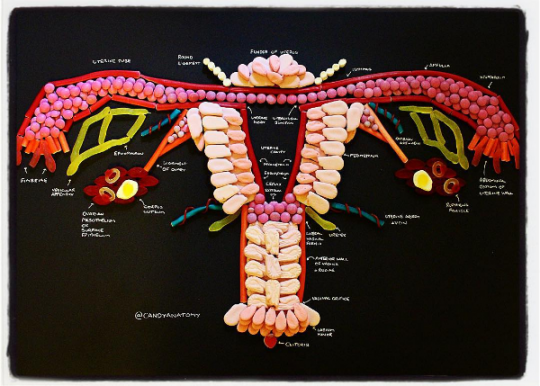 An image of the female reproductive system made up of a variety of candies by Candy Anatomy
