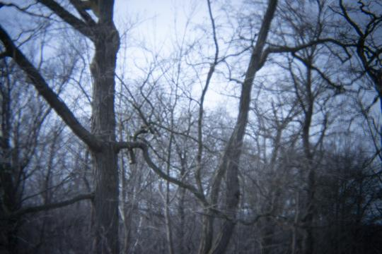 A photograph of leafless trees in Niagara Falls State Park at Goat Island and Three Sisters Islands by Laura Chenault