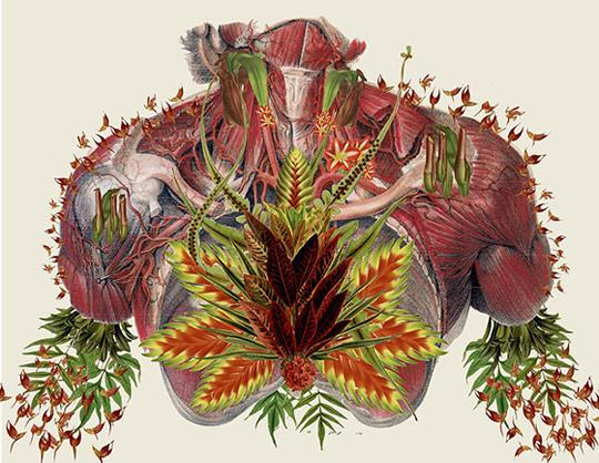 Grow. Travis Bedel collages a torso from images of muscles and botanicals.