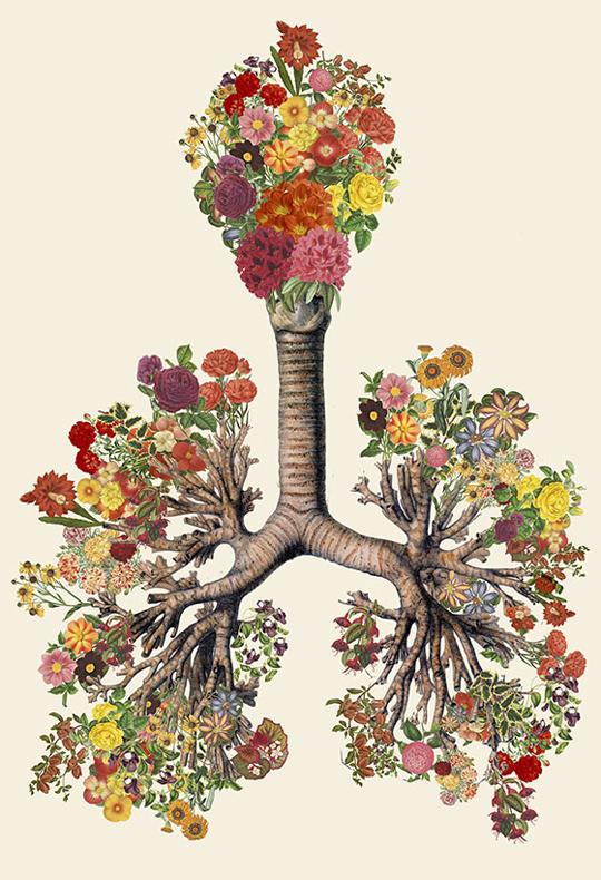Just Breathe. Travis Bedel collages lungs where the bronchioles have all be replaced with colorful flowers.