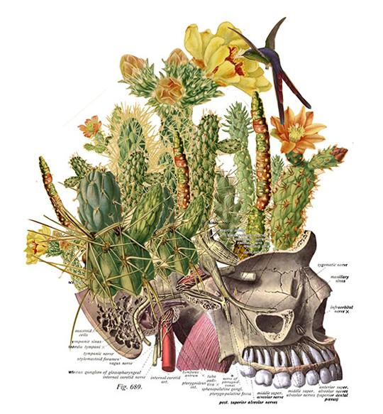 Pinheaded. Travis Bedel collages  the jaw portion of a skull with a bouquet of cacti where the brain and skull would be. A humminbird is feasting on a flower on one of the cacti.