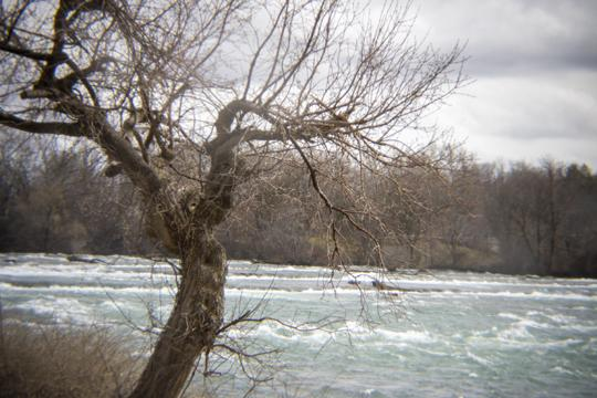 A photo of a bare tree and water rushing towards Niagara Falls by Laura Chenault – Exploring Prospect Point at Niagara Falls State Park