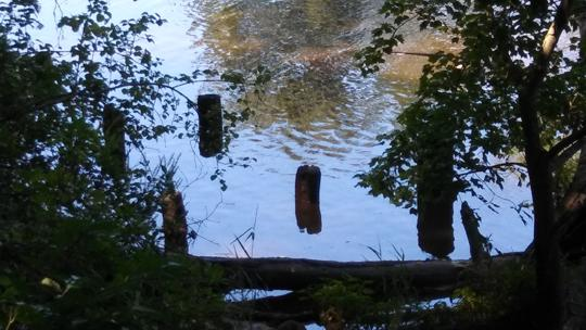 A photograph of the remains of a pier. Exploring Rancocas State Park by Laura Chenault