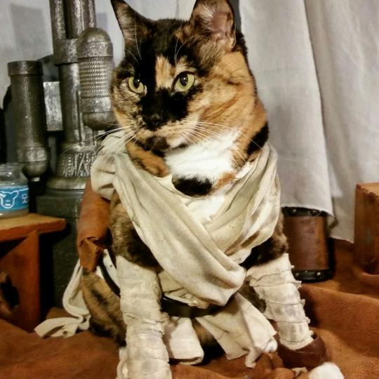 Rey Cat - Photo of a cat dressed up like Rey from Star Wars