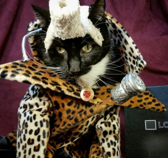 Ruby Rhod Cat - Photo of a cat dressed up like Ruby Rhod from The Fifth Element