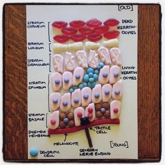 An image of skin made up of a variety of candies by Candy Anatomy