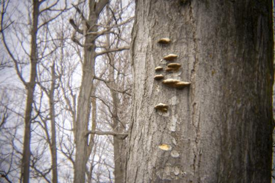Photo of mushrooms on a tree by Laura Chenault – Exploring Terrapin Point at Niagara Falls State Park