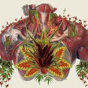 Grow by Travis Bedel is a collage of a torso collaged from images of muscles and botanicals.