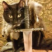 Jon Snow Cat - Photo of a cat dressed up like Jon Snow