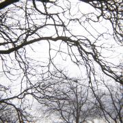 A photo of bare tree branches against a white sky by Laura Chenault – Exploring Prospect Point at Niagara Falls State Park